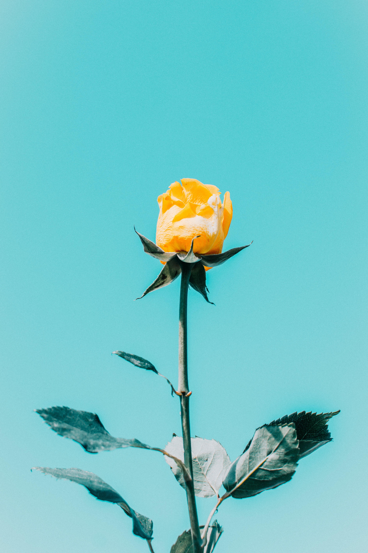 Immagine gratuita di colore, crescita, delicato, estate