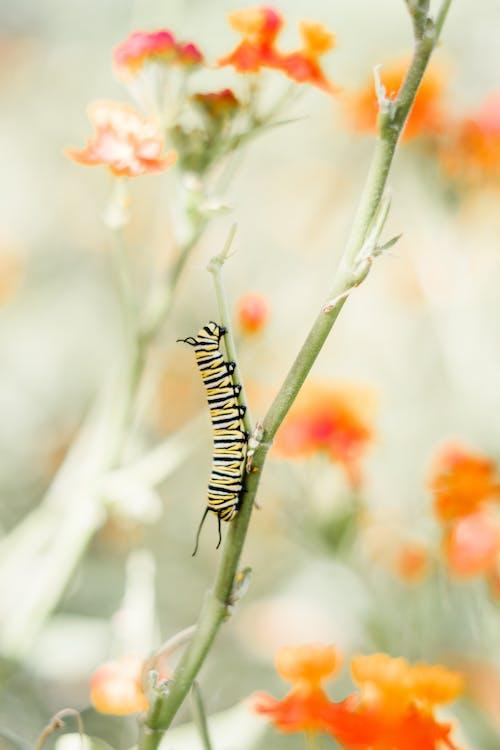 Immagine gratuita di caterpillar, flora, insetto, macro