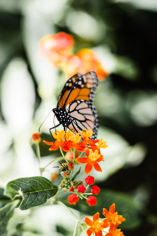 Darmowe zdjęcie z galerii z flora, kwiaty, makro, motyl