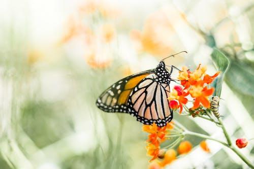 คลังภาพถ่ายฟรี ของ ความรัก, ชีวภาพ, ธรรมชาติ, ป่า