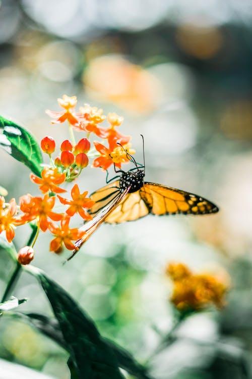 Immagine gratuita di farfalla, fiore, flora, giardino