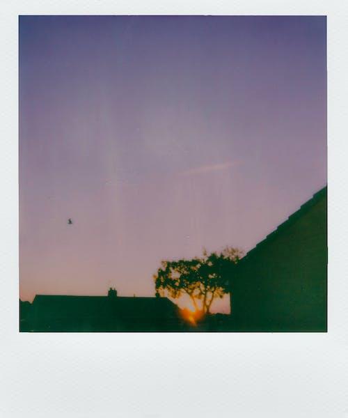 akşam karanlığı, anlık, anlık film, film içeren Ücretsiz stok fotoğraf
