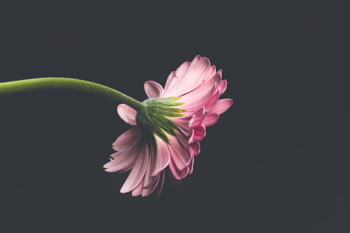 arrière-plans de bureau, fleur, fleurir