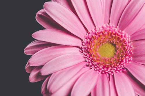 Photos gratuites de fleur, fleurir, flore, fond d'écran gratuit
