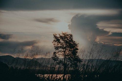 4Kの壁紙, シルエット, 母なる自然, 美しい風景の無料の写真素材