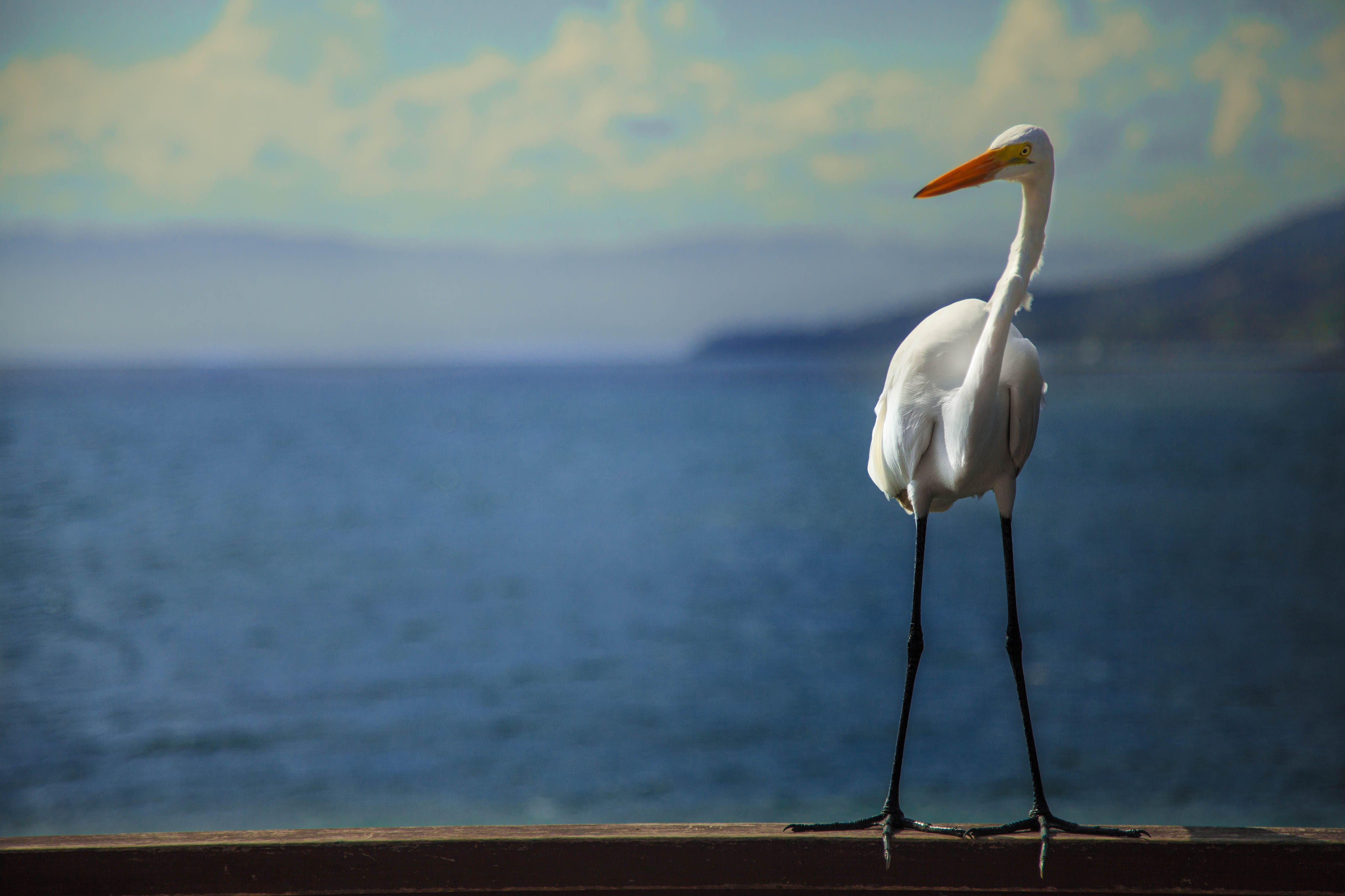 Gratis lagerfoto af 4k-baggrund, blå hav, hav, hejre