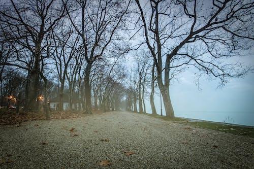 Základová fotografie zdarma na téma barva, barvy, brzké ráno, Budapešť