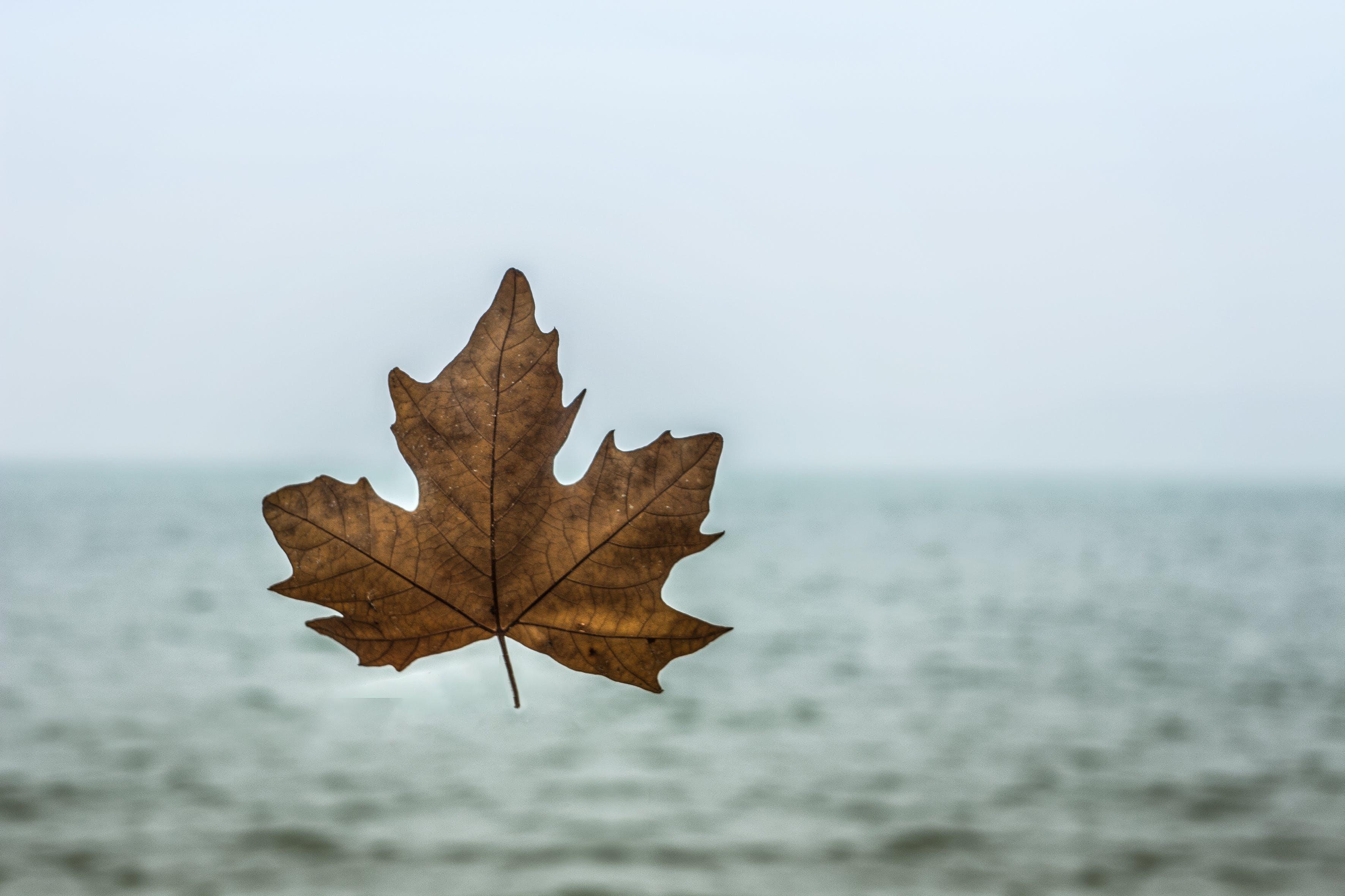 Free stock photo of animal photography, autumn, autumn colours, autumn leaf