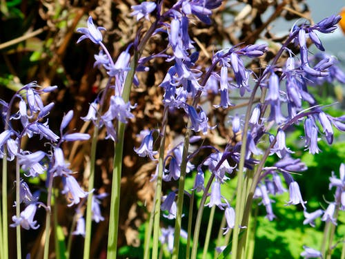 Free stock photo of bluebells, garden, newcastle, old Garden