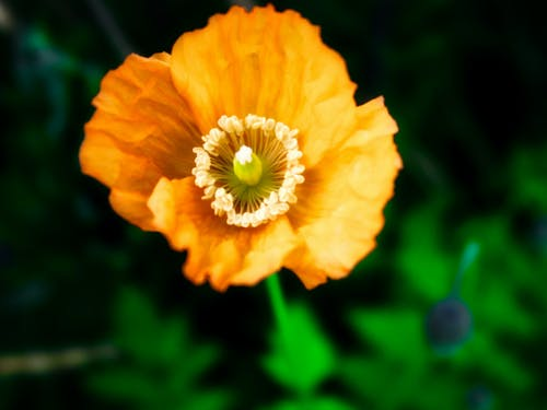 Free stock photo of flower, green, newcastle, orange flower