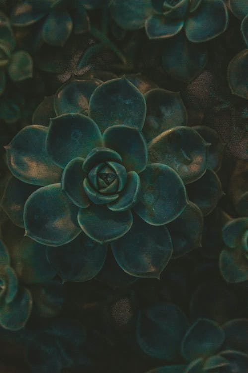 壁紙, 植物, 深綠色的植物