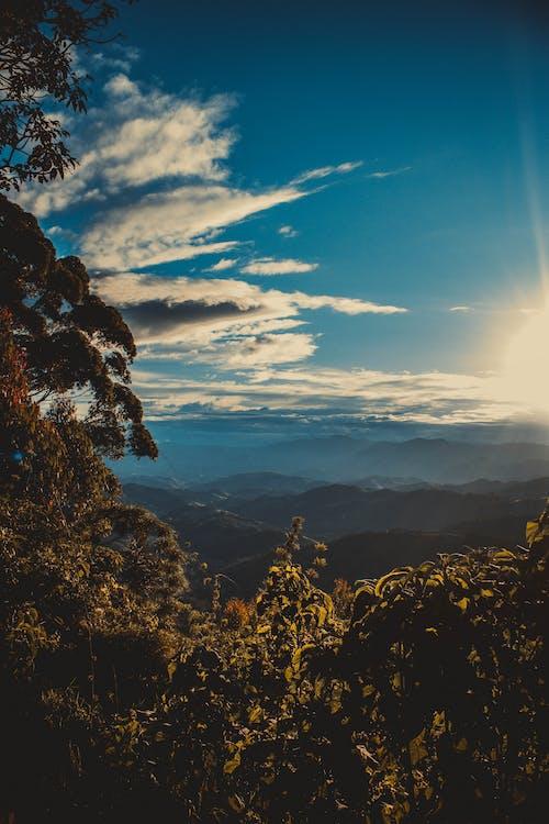 Ảnh lưu trữ miễn phí về ánh sáng ban ngày, bầu trời, cây, chân trời