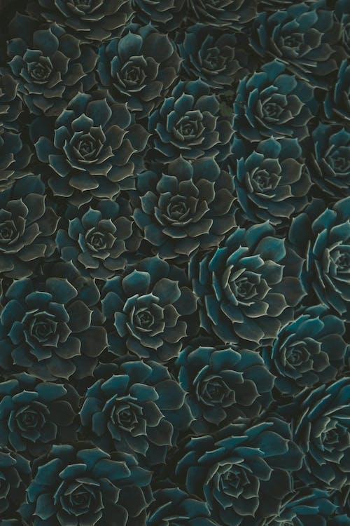 botanic, culori, floră