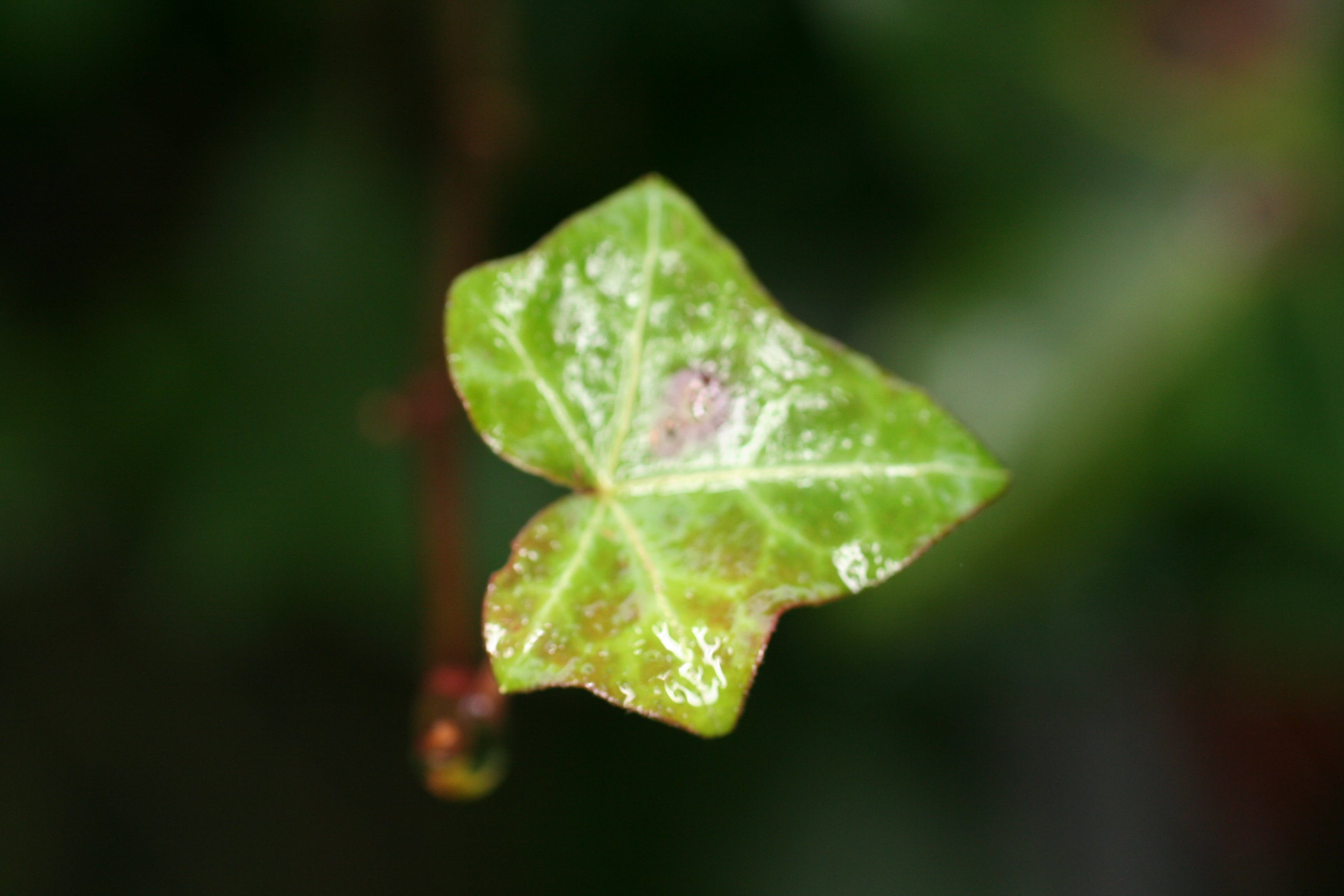 Free stock photo of green, leaf