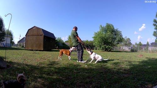 Immagine gratuita di alabama, cane, cani, estate