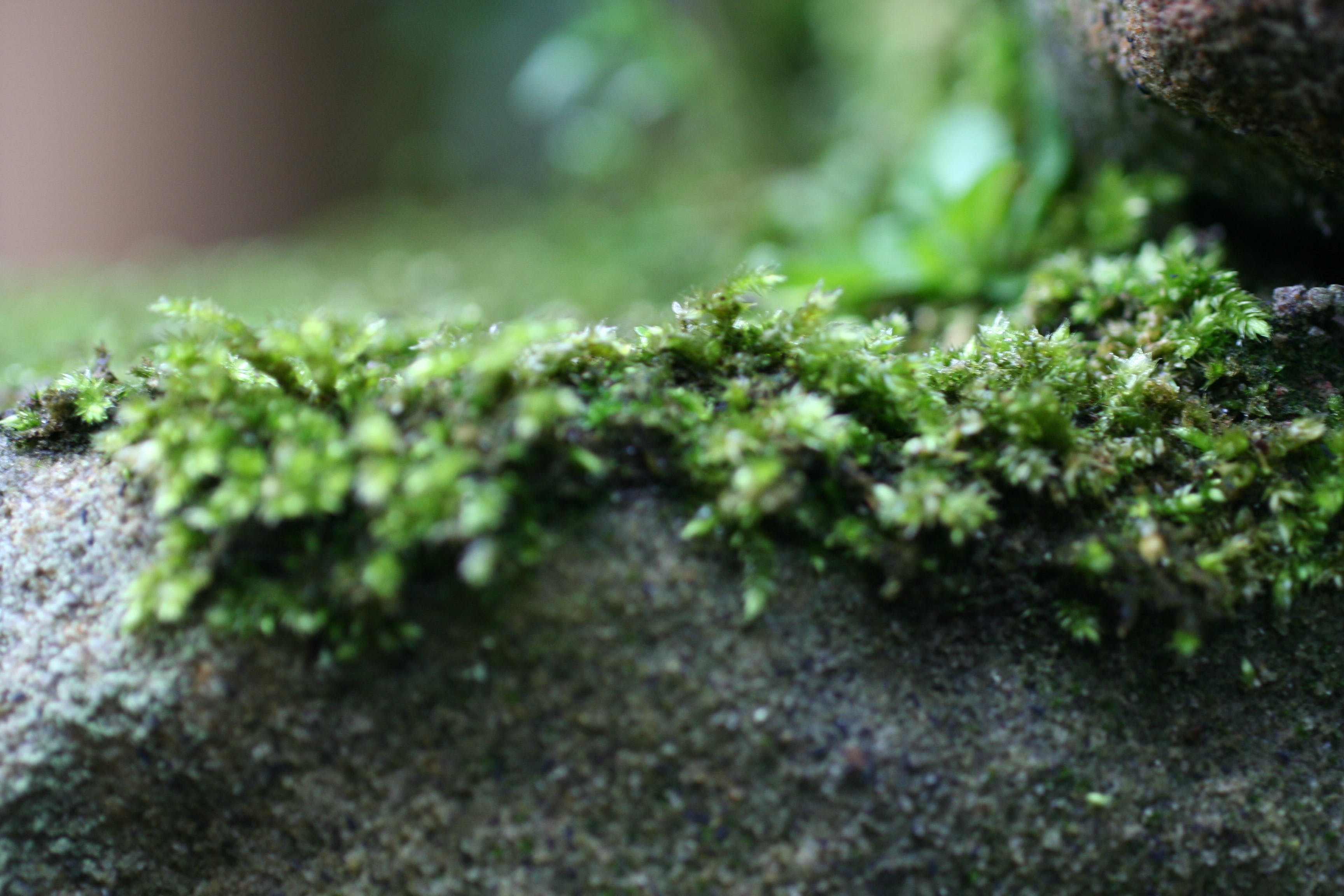 Free stock photo of green, grey, moss, rock