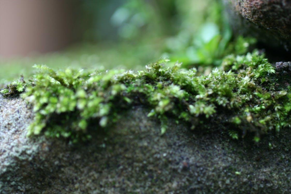 green, grey, moss