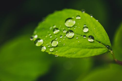 Close-up Photo of Leaf With Dewdrops