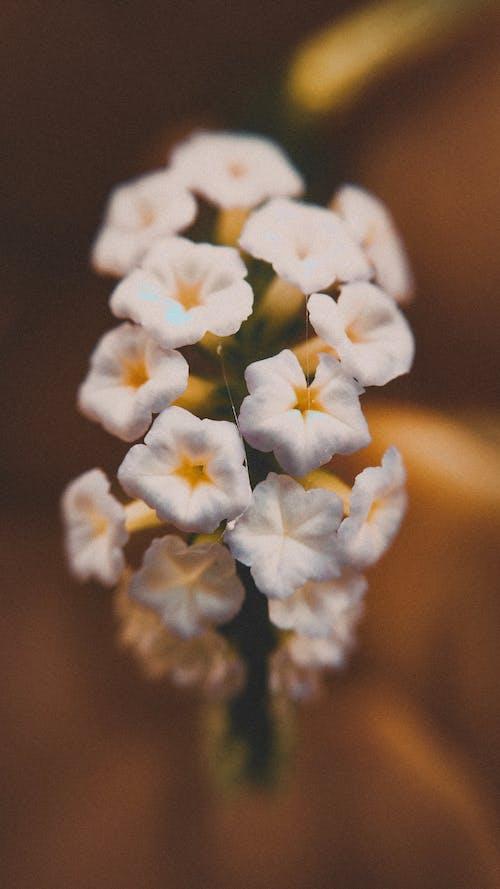 Foto stok gratis bunga putih, bunga-bunga indah, foto makro