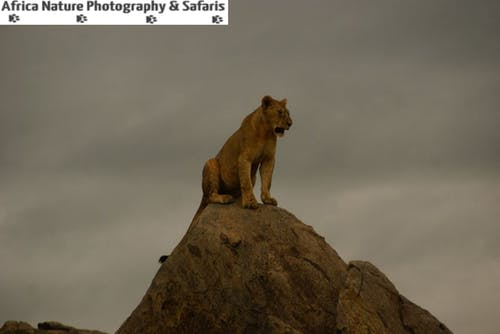 Free stock photo of ngorongoro, serengeti, tanzania safari, tanzania safari packages