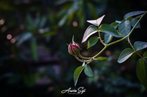 Gratis lagerfoto af kerala, naturfotografering
