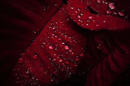 しずく, フォーカス, フローラ, 水滴の無料の写真素材