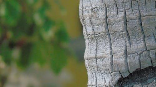 Gratis stockfoto met blaffen, boom, buiten, close-up