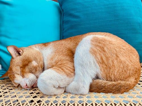 Δωρεάν στοκ φωτογραφιών με γάτα κοιμάται
