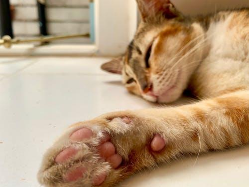Δωρεάν στοκ φωτογραφιών με τα πόδια της γάτας