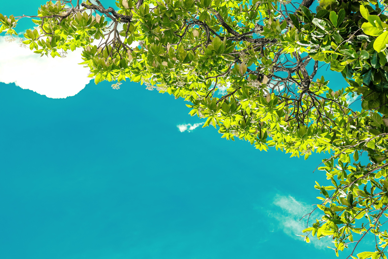 açık, ada, ağaç, ahşap içeren Ücretsiz stok fotoğraf