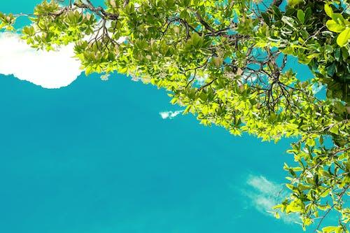 Základová fotografie zdarma na téma listy, rostlina, strom