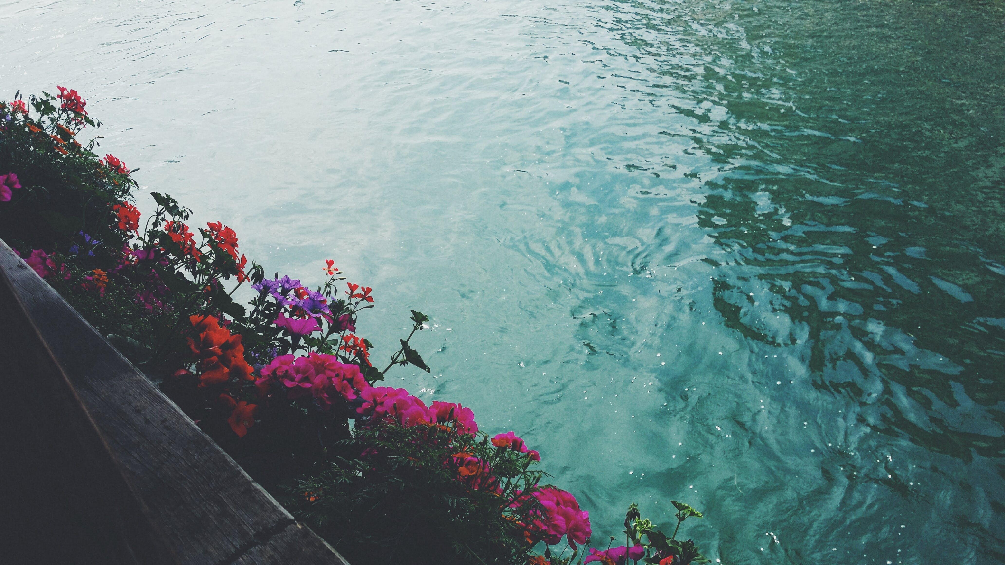 вода, заводы, растения