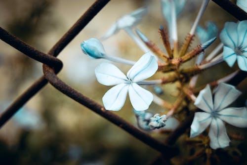 Gratis arkivbilde med blomstrer