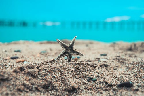 Free stock photo of sea-life