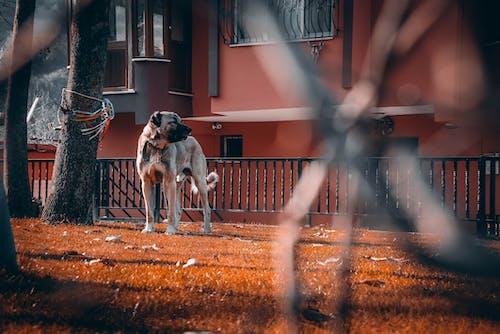 가벼운, 개, 개의, 거리의 무료 스톡 사진