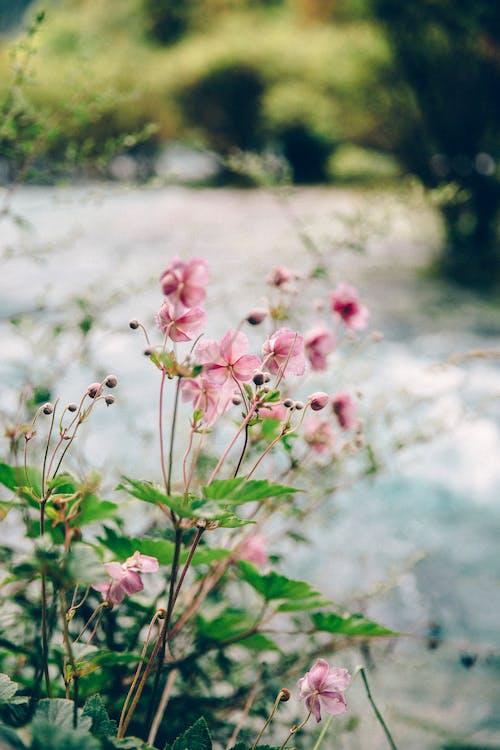 Ảnh lưu trữ miễn phí về ban ngày, cận cảnh, cánh hoa, cỏ