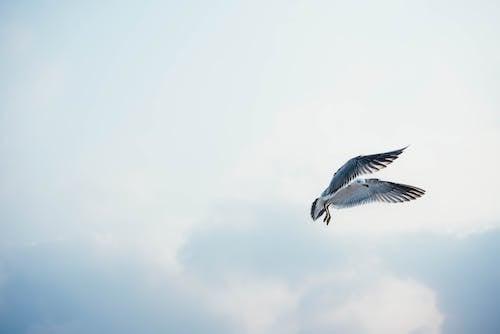 Foto d'estoc gratuïta de acció, animal, au, aviari