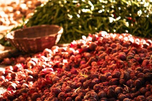 Immagine gratuita di agricoltura, cipolle, collezione vintage, distretto del centro