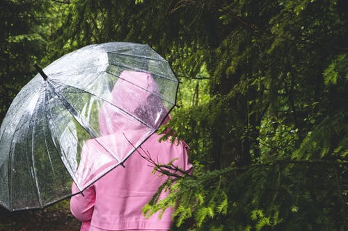 Ilmainen kuvapankkikuva tunnisteilla asetelma, henkilö, puut, sateenvarjo