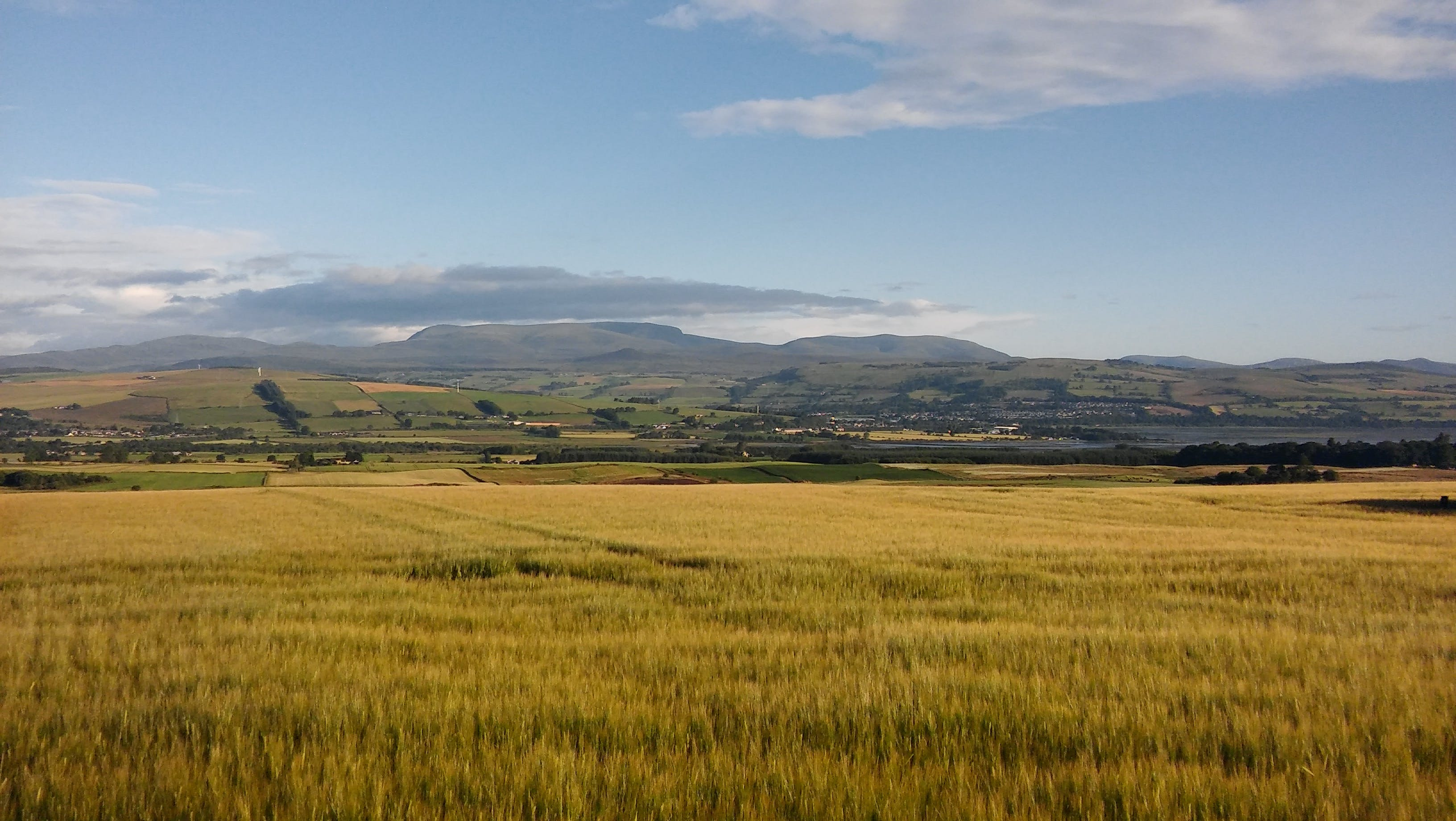 Brown Field Landscape Photography