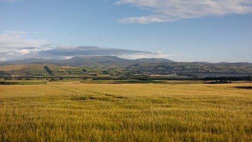 Бесплатное стоковое фото с гора, дневной свет, зерновые, небо