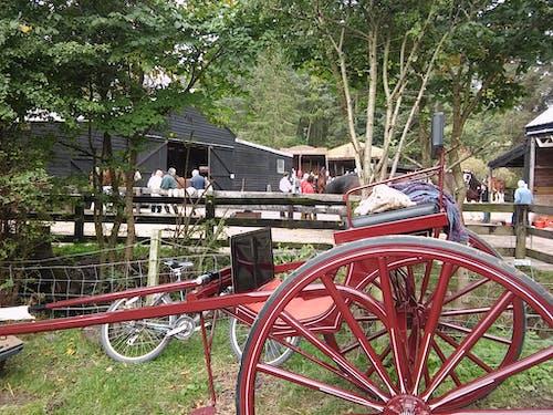Foto profissional grátis de Antiguidade, buggy de cavalo, carrinho velho, cavalo e carrinho