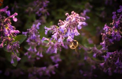 Photos gratuites de abeille, alimenter, centrale, coucher de soleil