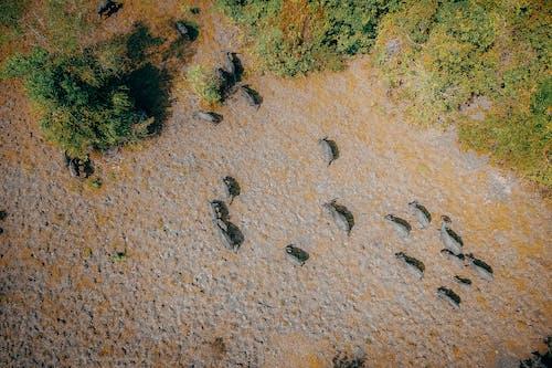 カラフル, シーン, ナチュラル, 動物の無料の写真素材