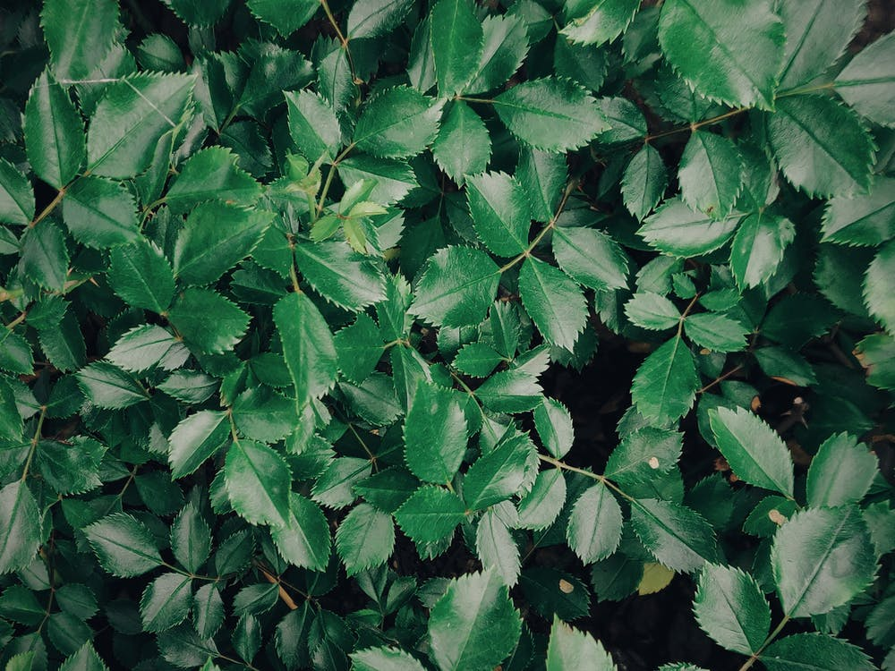 botanický, flóra, lístie