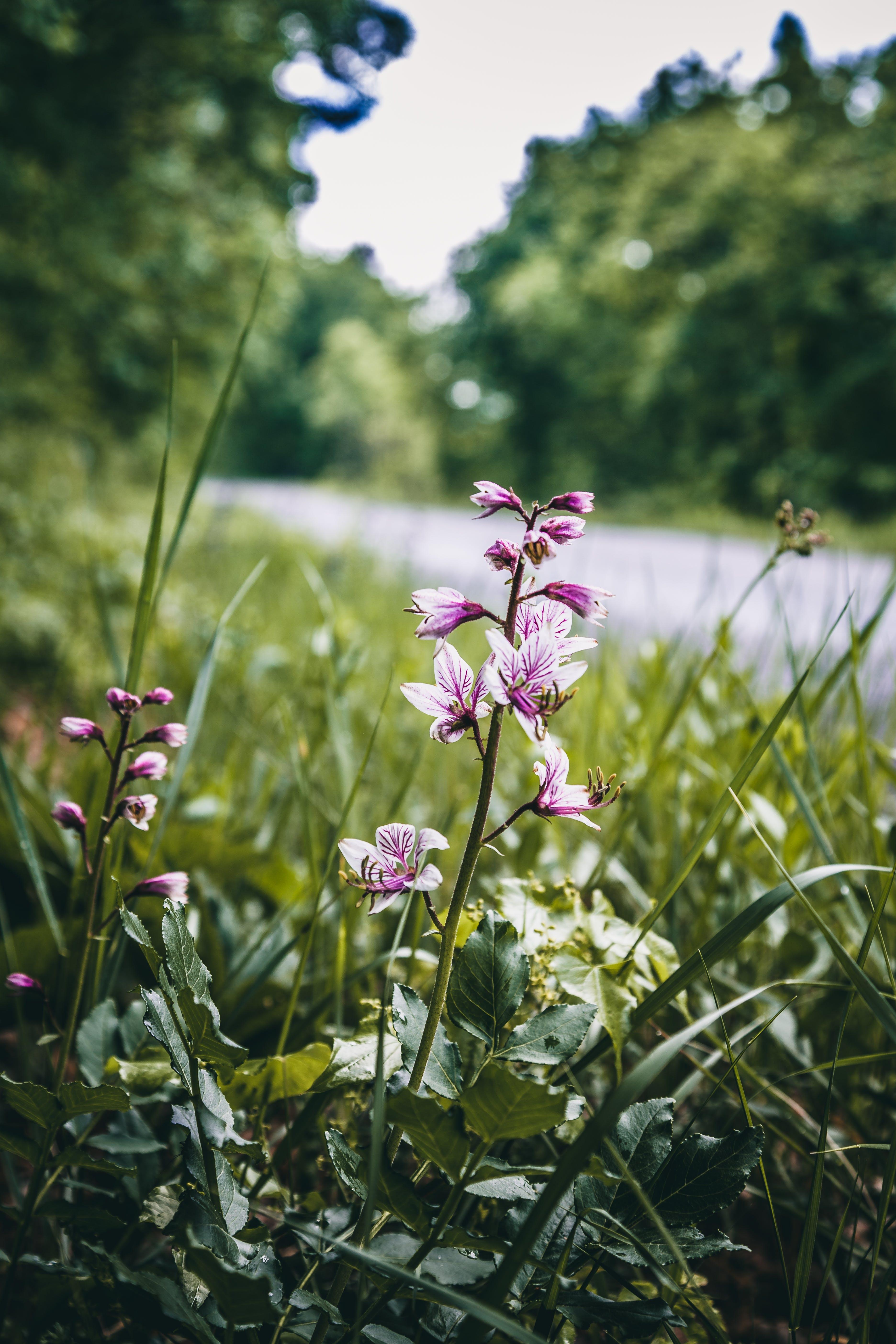 Základová fotografie zdarma na téma divoké květiny, fialové květiny, flóra, hloubka ostrosti