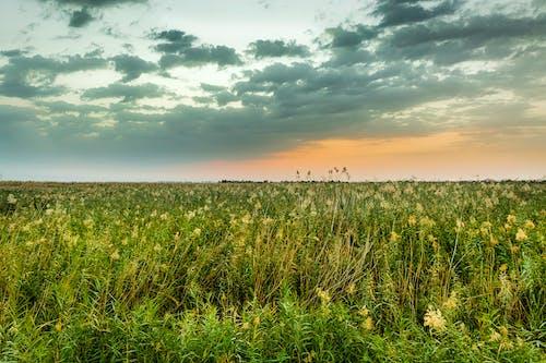 Ingyenes stockfotó jahra, jahra természetvédelmi terület, kuvait, Napkelte témában
