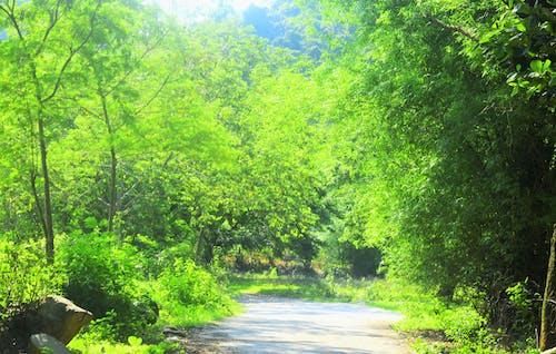 Ilmainen kuvapankkikuva tunnisteilla #nature, #naturephotography, #rentoutua, maa