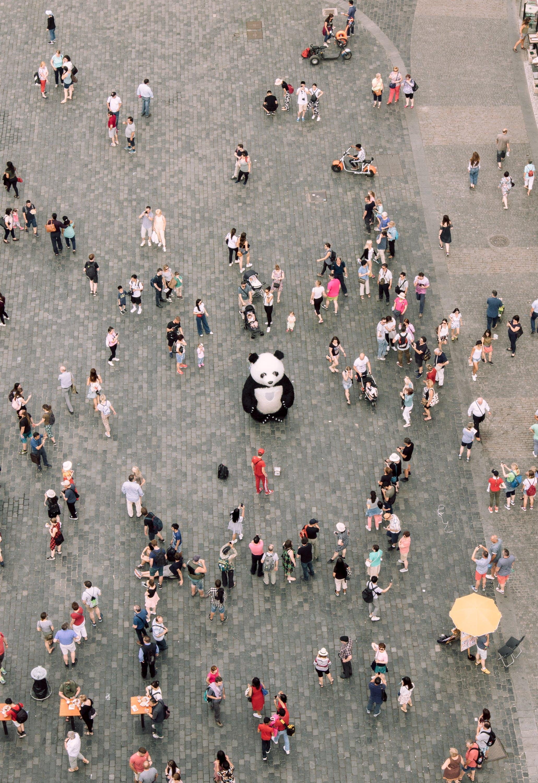 #urban, 以上, 吉祥物, 吵雜 的 免费素材照片