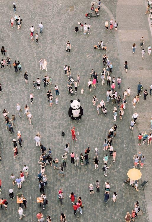 People Gathered Watching A Panda Mascot